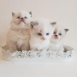 Клайд с сестрами